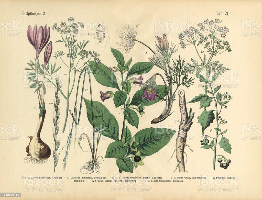 Poisonous and Toxic Plants, Victorian Botanical Illustration vector art illustration