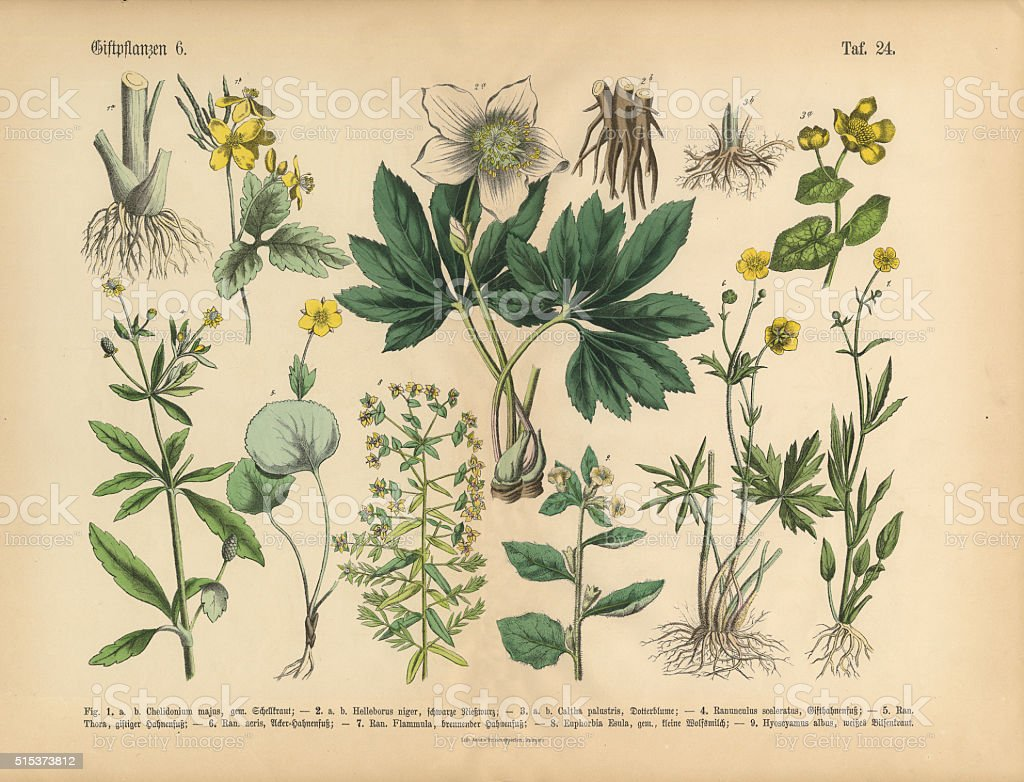 Poisonous and Toxic Plants, Victorian Botanical Illustration vector art illustration