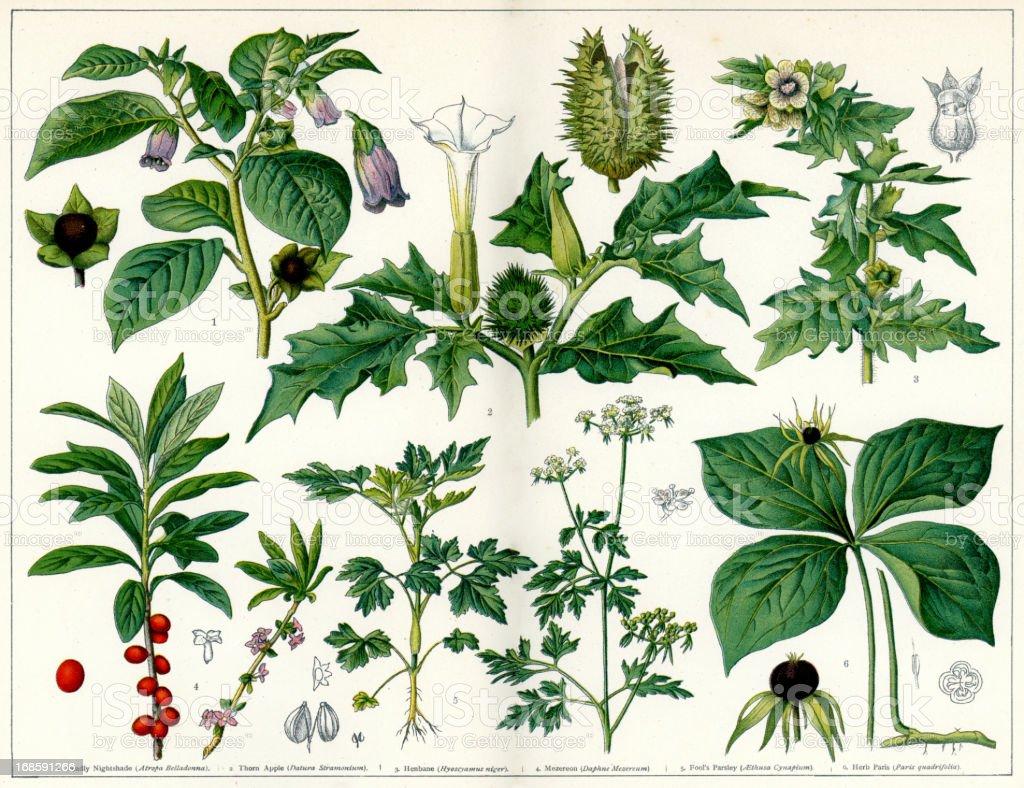Poisonous Plants vector art illustration