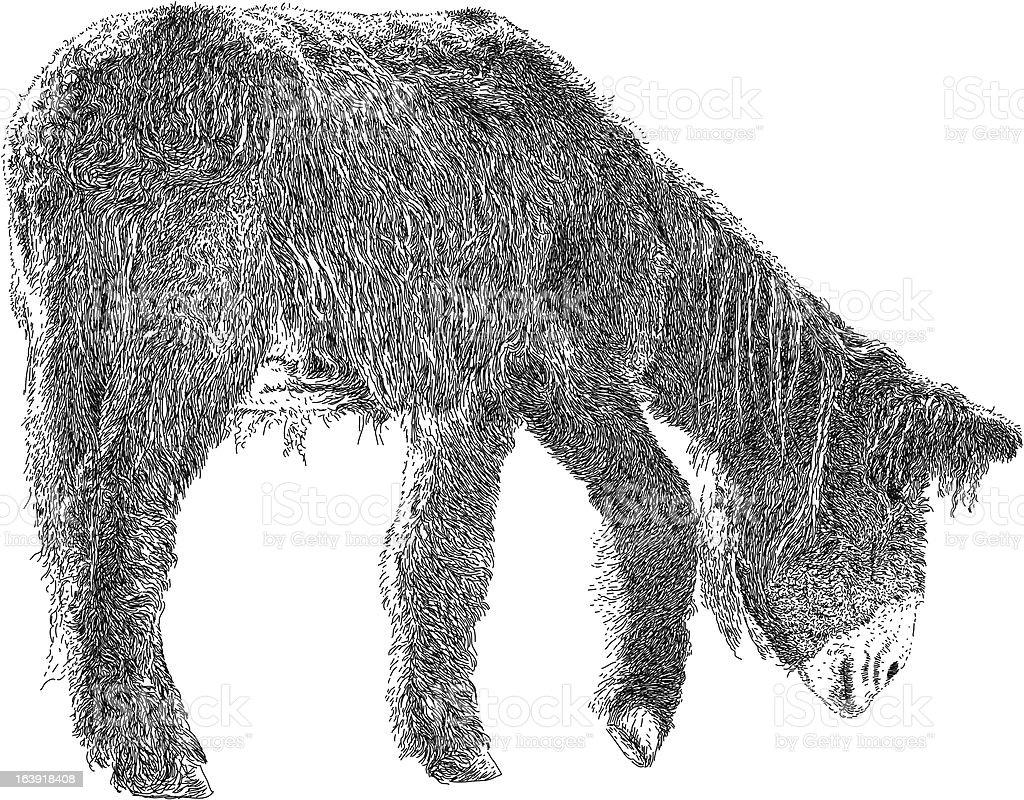 Poitou Donkey royalty-free stock vector art