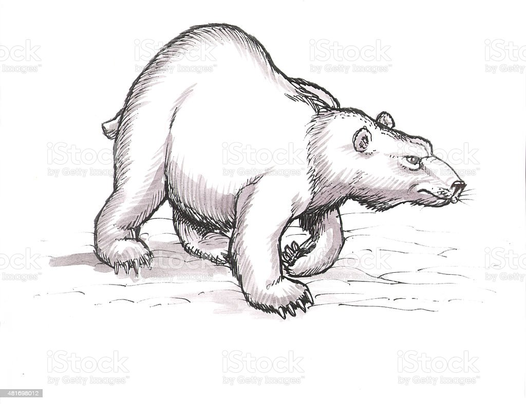 Polar Bear (Comic Lizenzfreies vektor illustration