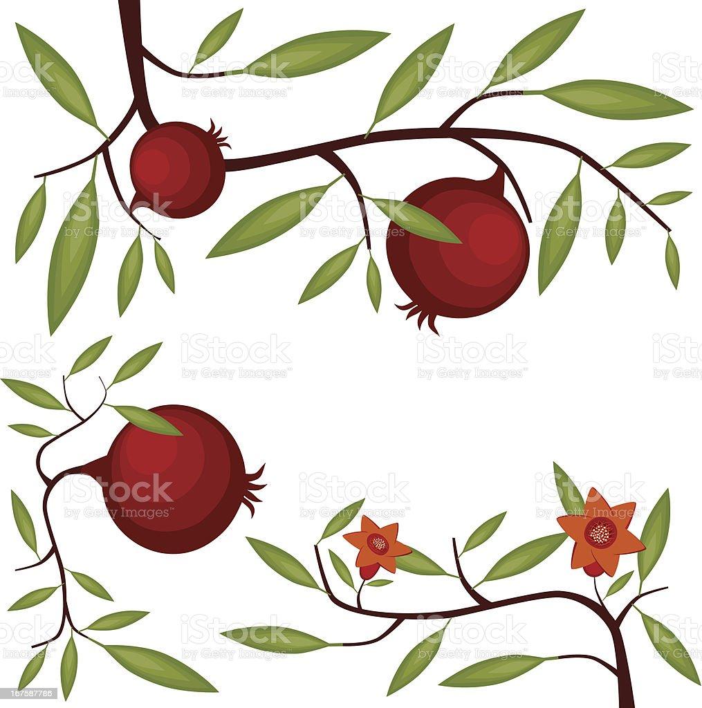 Pomegranate Blossom And Fruit vector art illustration