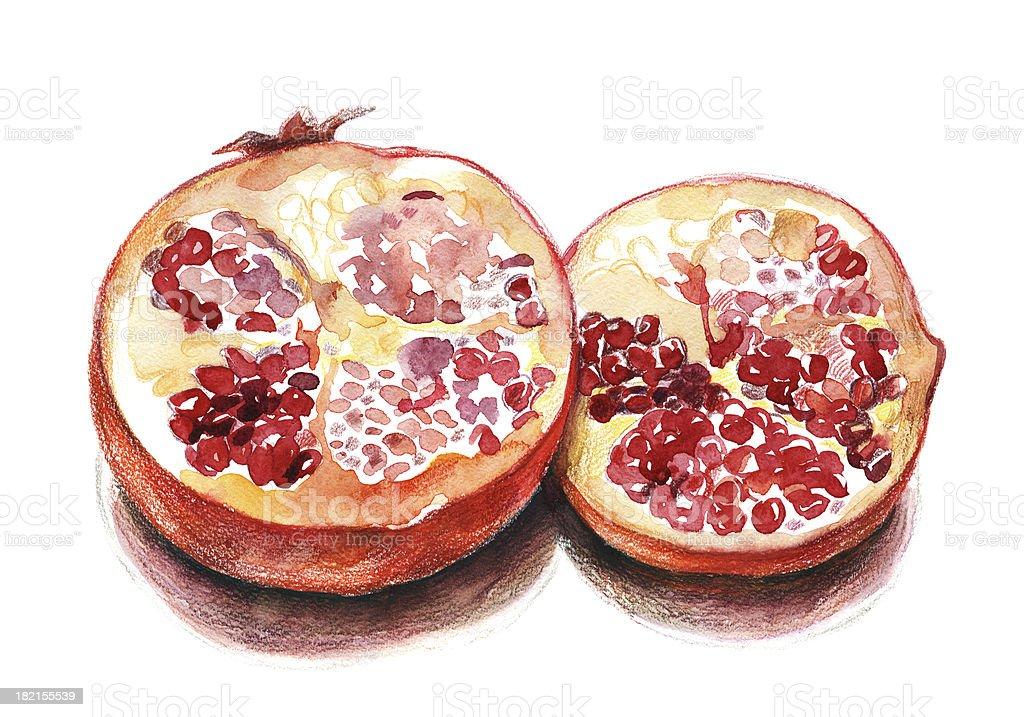 Pomegranate royalty-free stock vector art