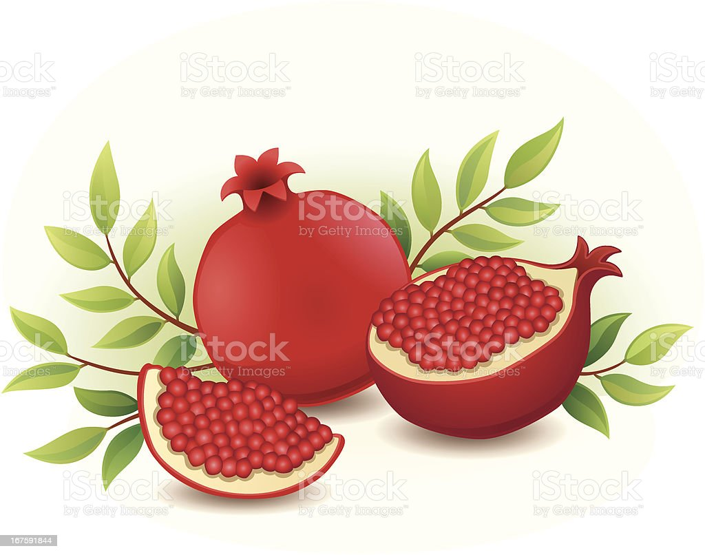 Pomegranates royalty-free stock vector art