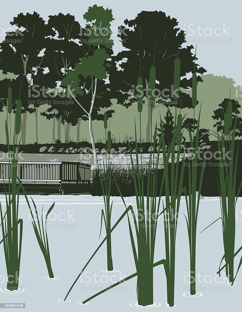 Pond landscape with Cattails vector art illustration