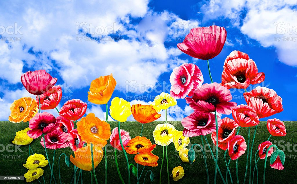 Poppies in a Field vector art illustration