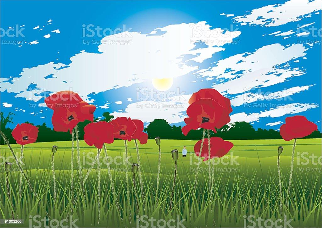 Poppy field vector art illustration