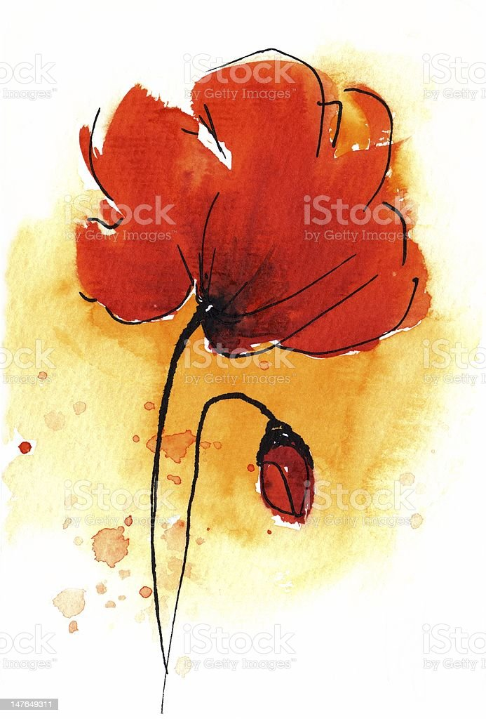 Poppy Illustration on white background royalty-free stock vector art