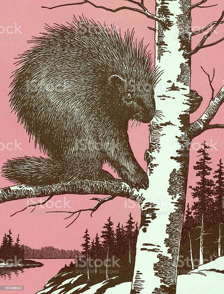 Porcupine in Tree royalty-free stock vector art
