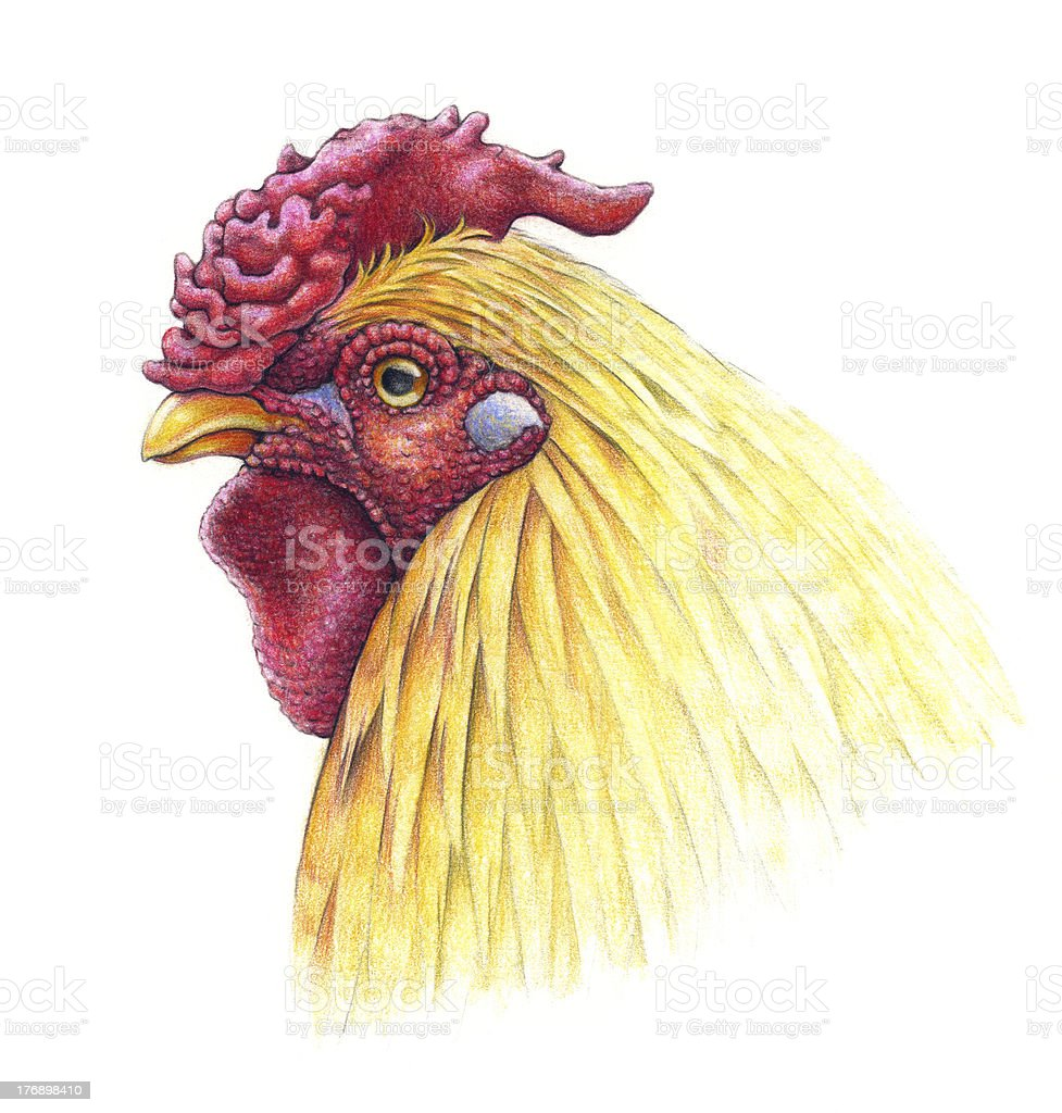 Portrait of a rooster royalty-free stock vector art