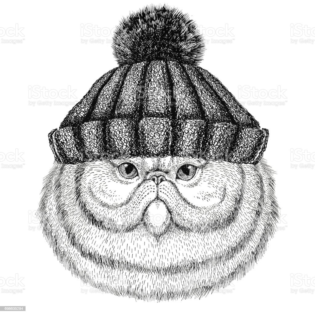 Portrait of fluffy persian cat wearing winter knitted hat vector art illustration