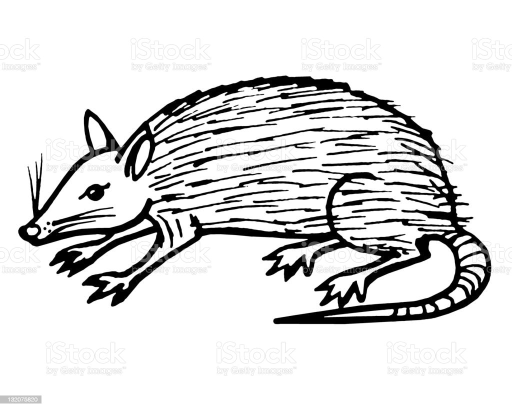 Possum royalty-free stock vector art