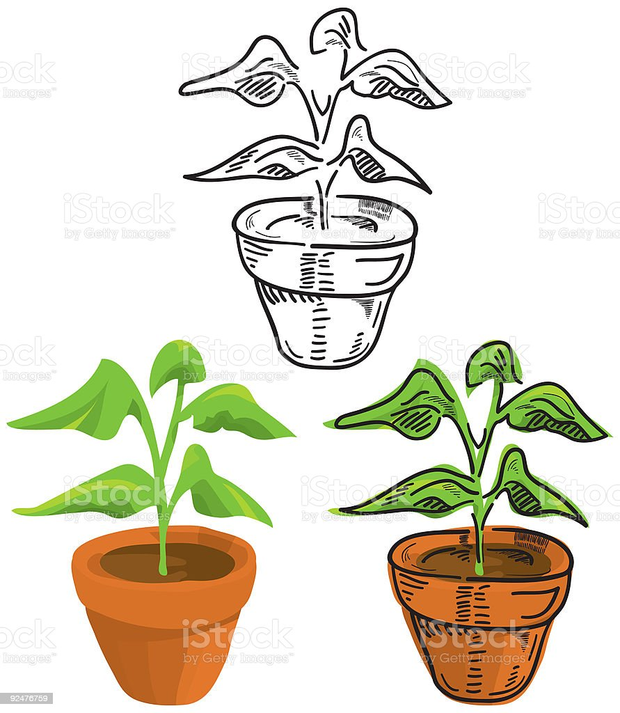 Potted Plant vector art illustration