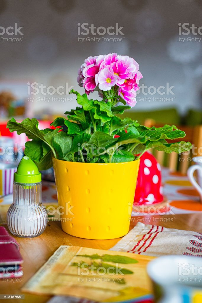 Primrose in a yellow pot vector art illustration