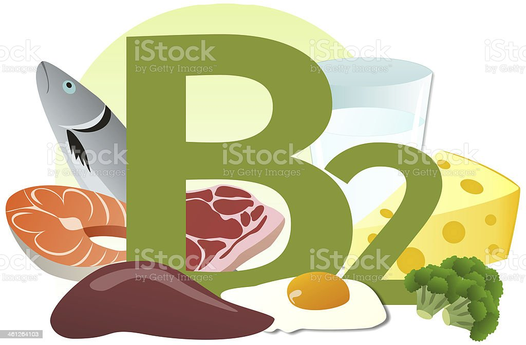 products containing vitamin B2 vector art illustration