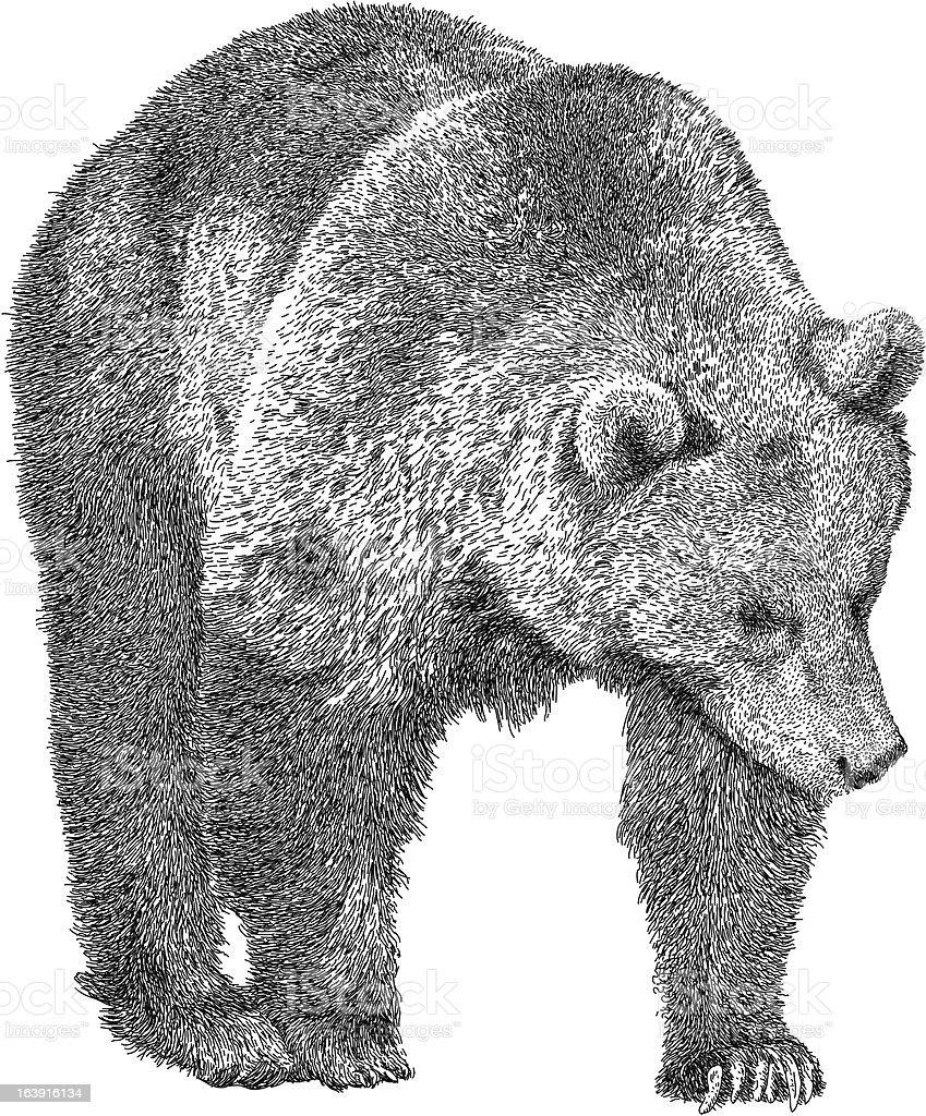 Prowling Bear royalty-free stock vector art
