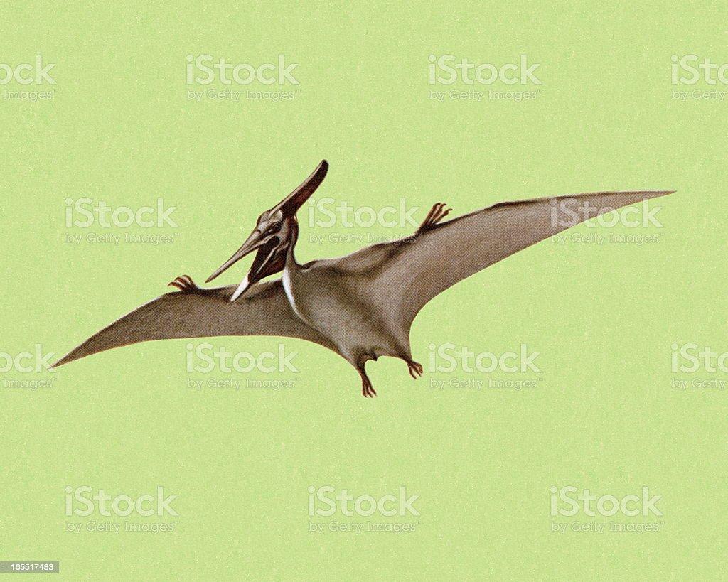 Pterodactyl royalty-free stock vector art