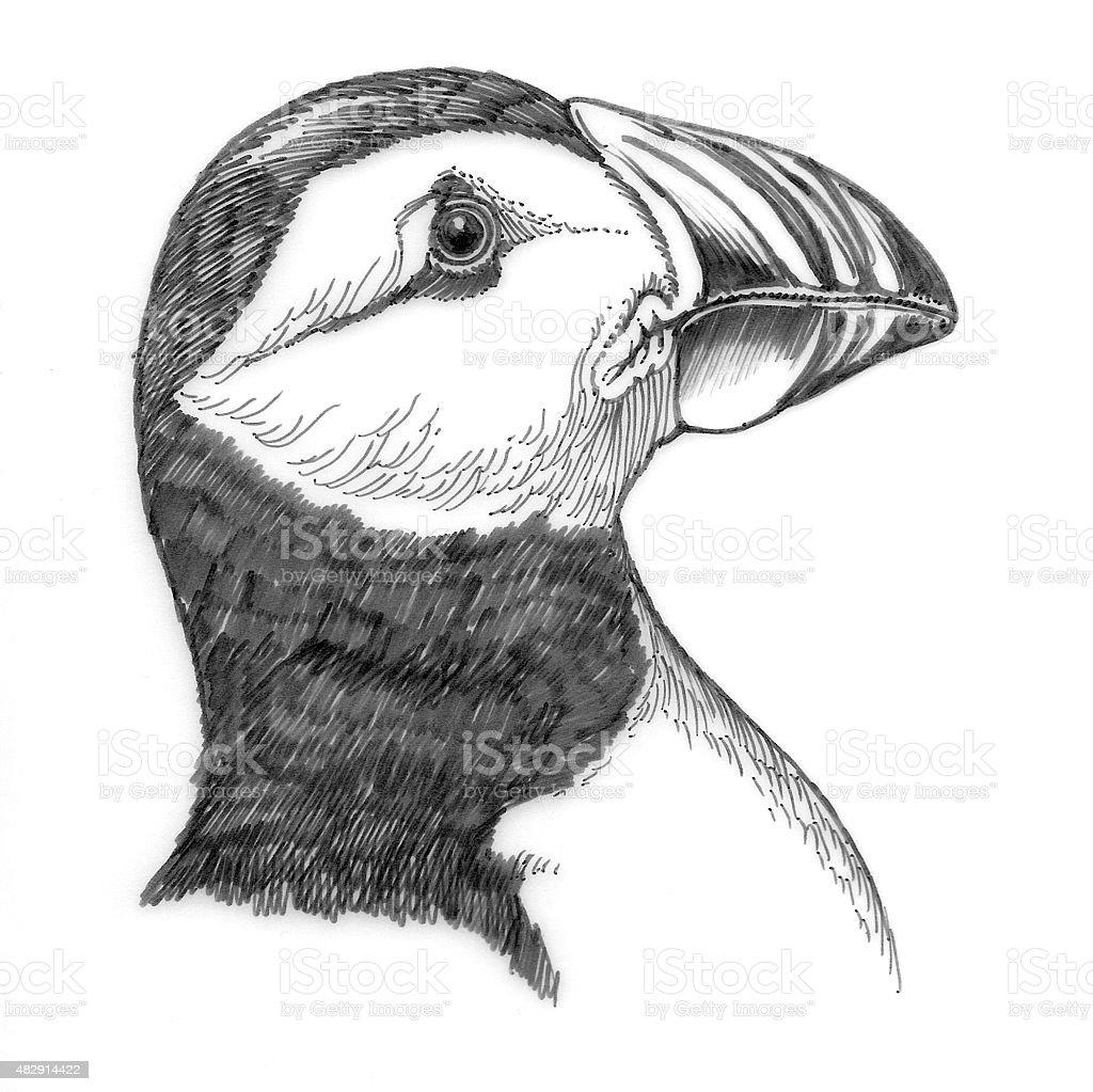 Papageitaucher Lizenzfreies vektor illustration