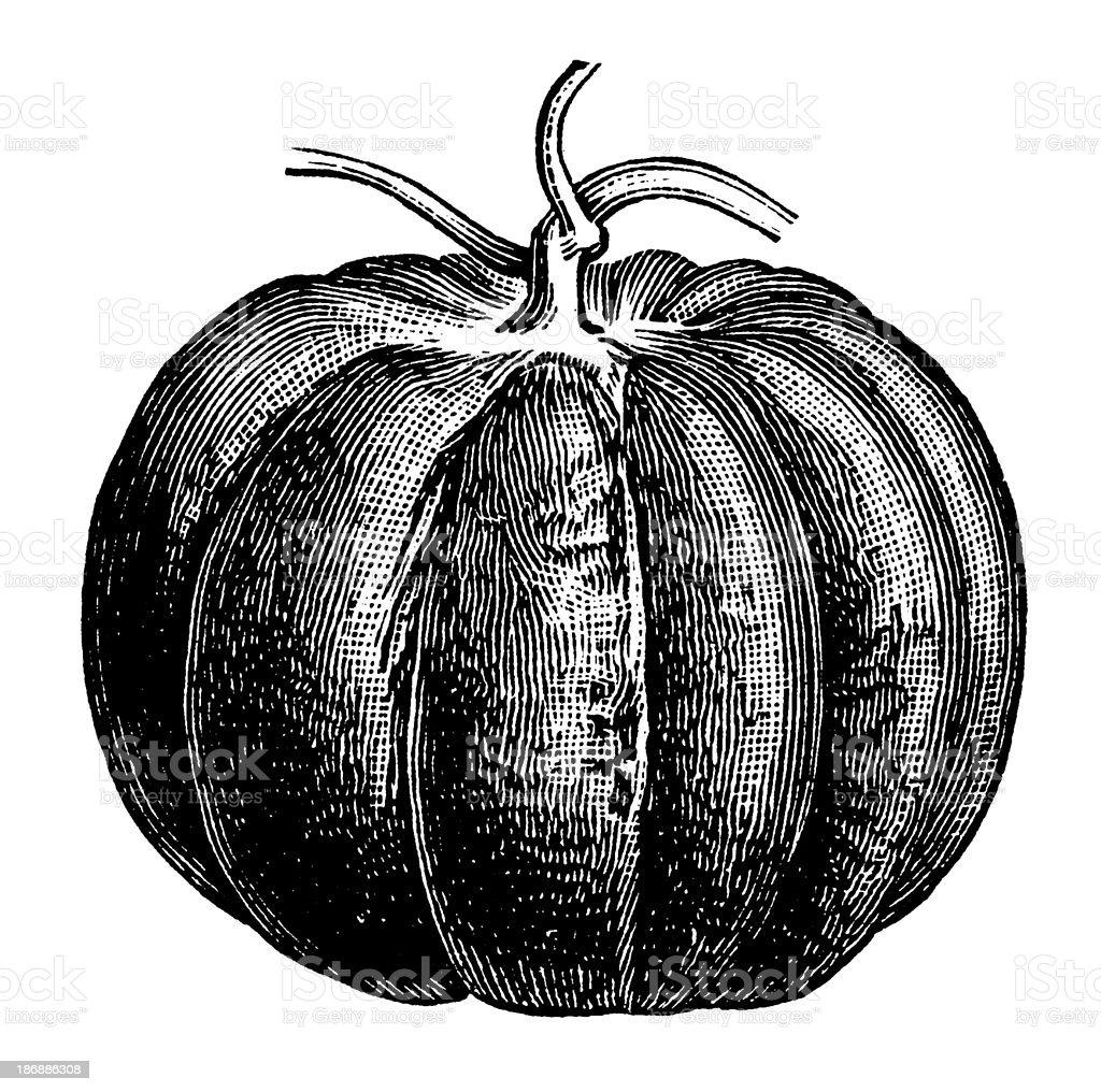 Pumpkin | Antique Design Illustrations royalty-free stock vector art