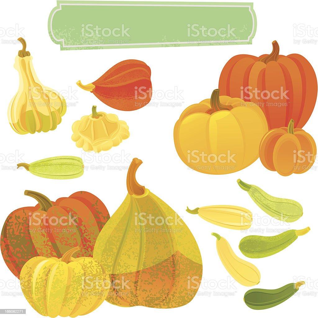 Pumpkins and Squashes vector art illustration