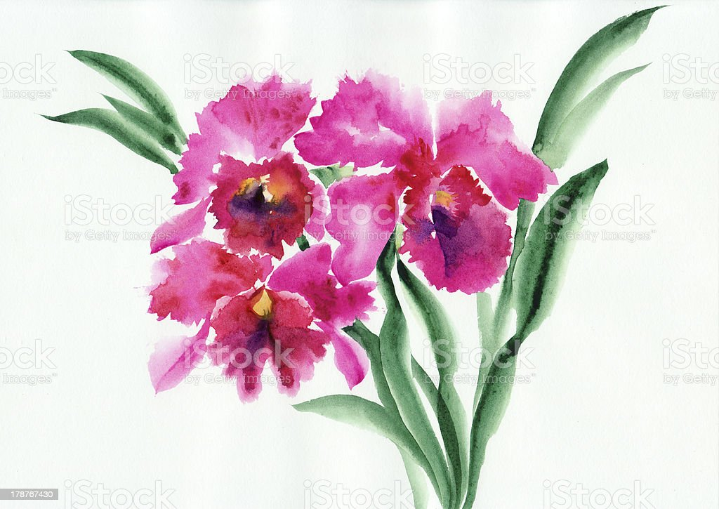 Purple orchids royalty-free stock vector art