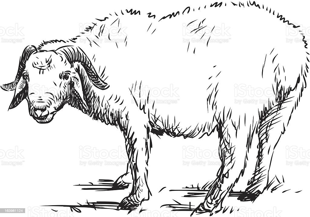 ram royalty-free stock vector art