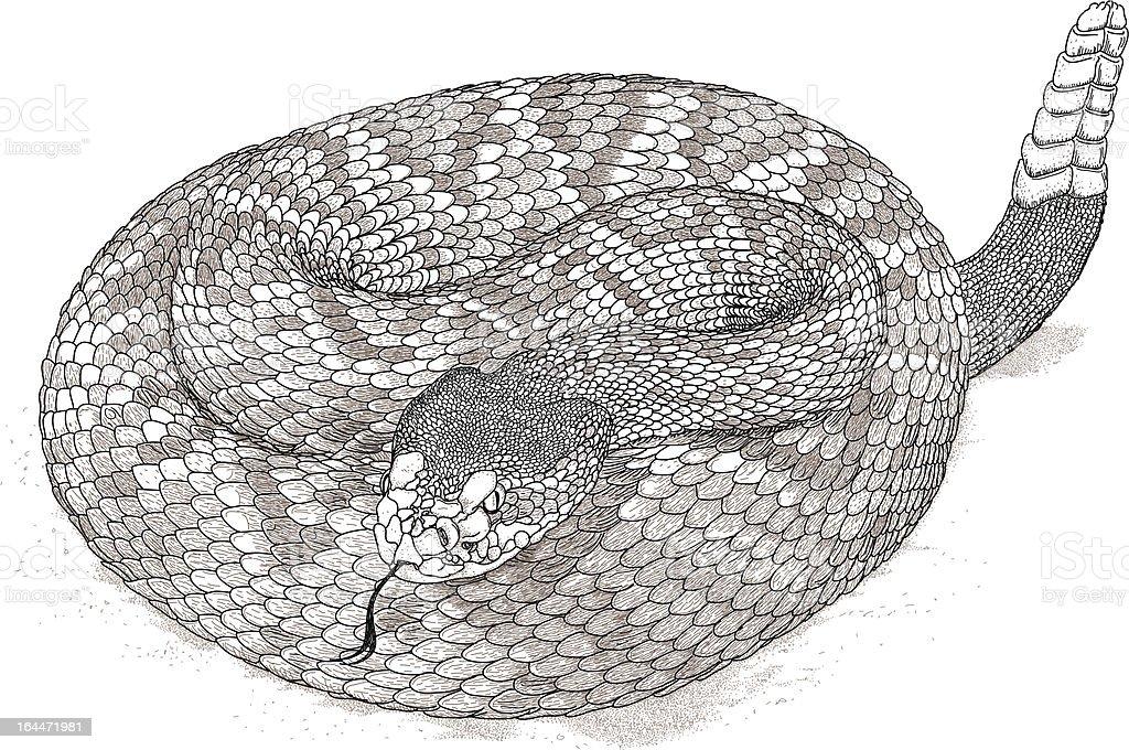 Rattlesnake Stroke vector art illustration