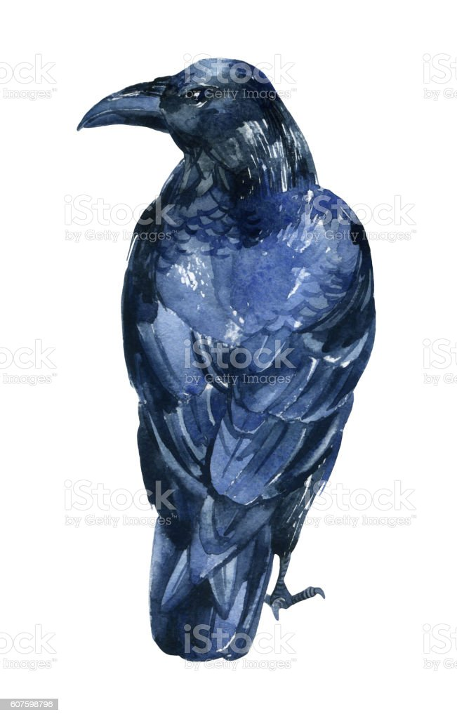 Raven illustration isolated on white background. vector art illustration