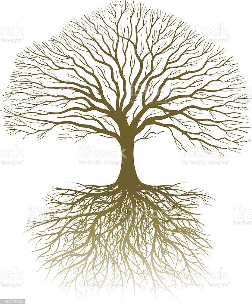 本物の樹木や根 のイラスト素材 165597666 | iStock