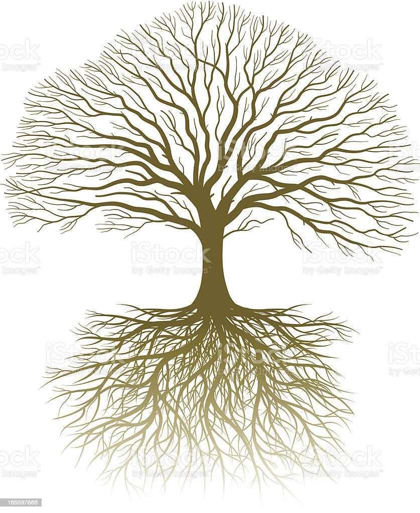 Real tree and roots vector art illustration