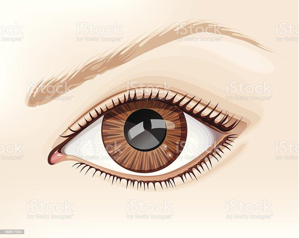 realistic vector eye royalty-free stock vector art