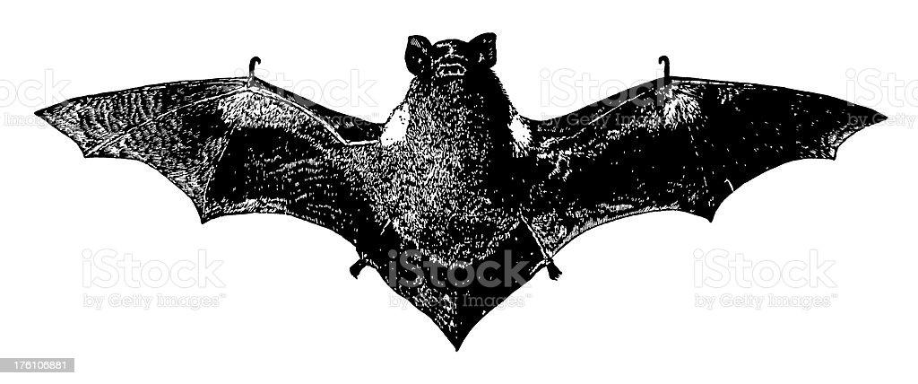 Red bat | Antique Animal Illustrations royalty-free stock vector art