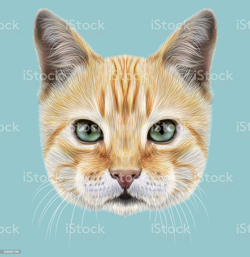 Red Cat. Illustrated Portrait vector art illustration