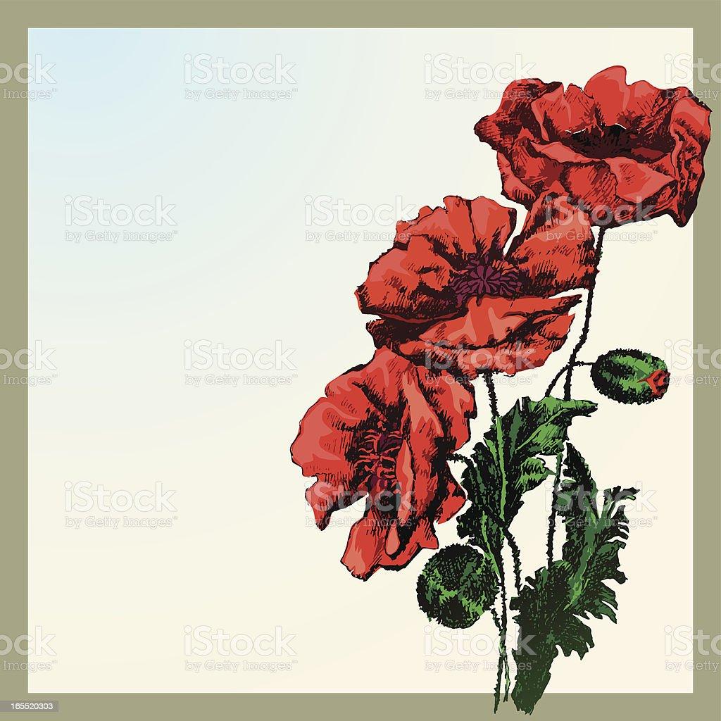 Red Corn Poppy Flower vector art illustration
