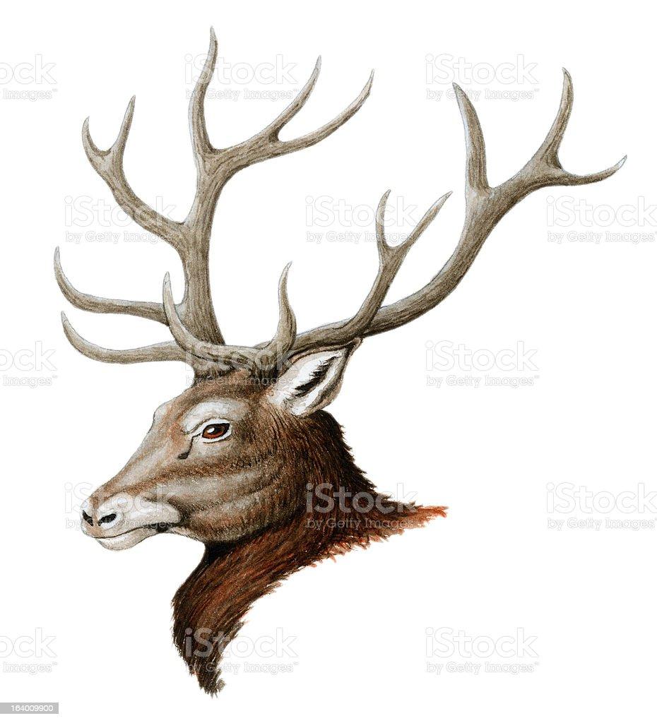 Red Deer royalty-free stock vector art