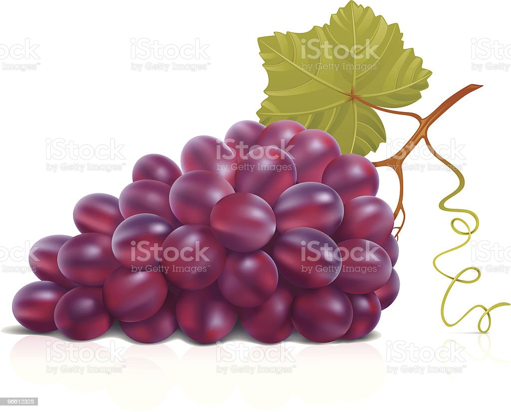Red grape vector art illustration