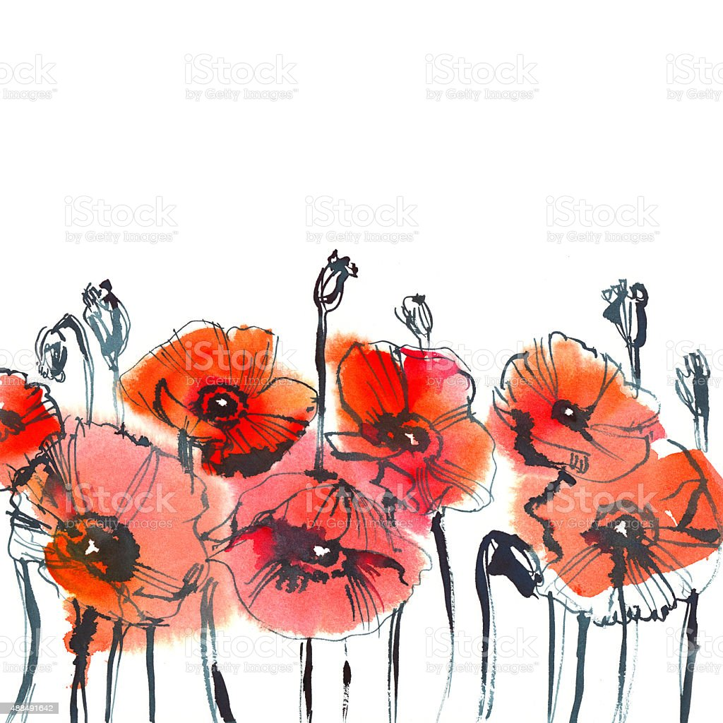 red poppies on white background vector art illustration