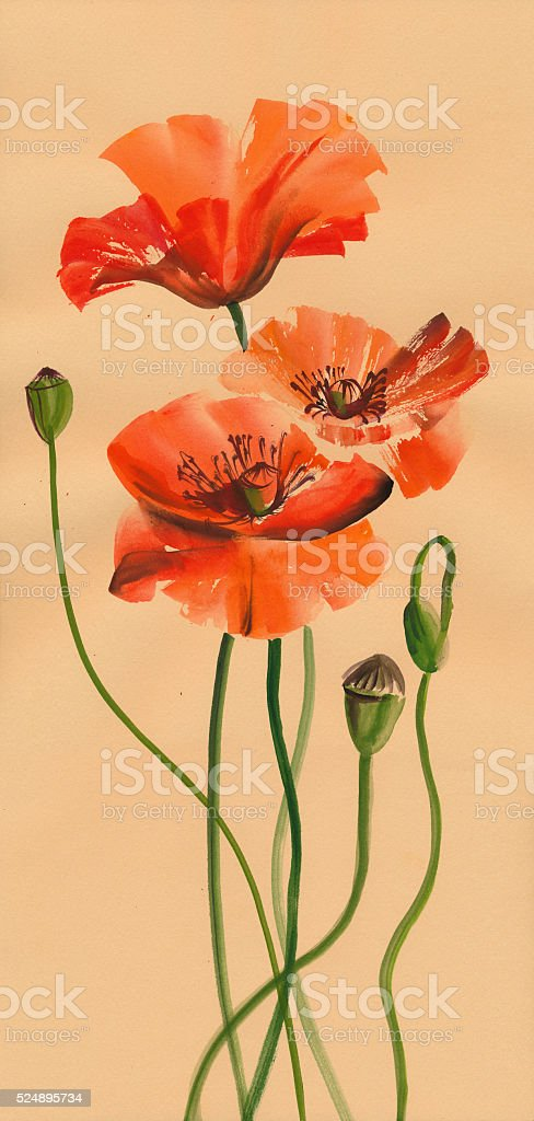 Red poppies watercolor painting stock photo
