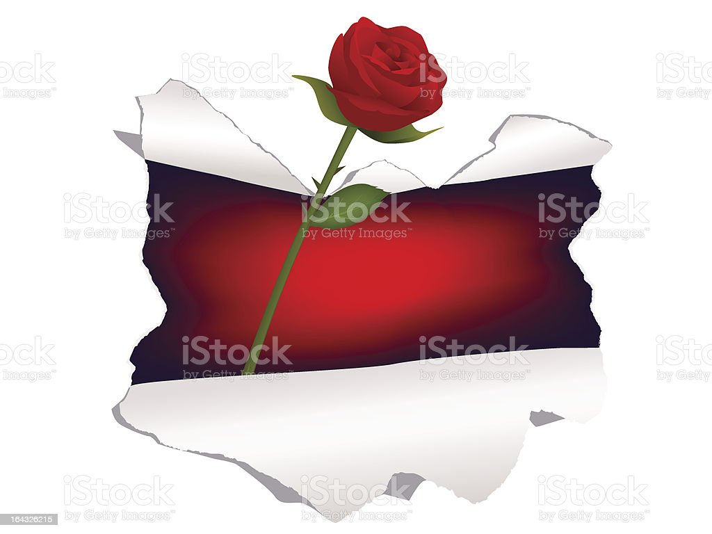 Red rose throught a paper hole vector art illustration