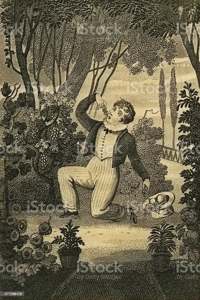 Regency era boy gorging on stolen fruit (c1830 engraving) vector art illustration