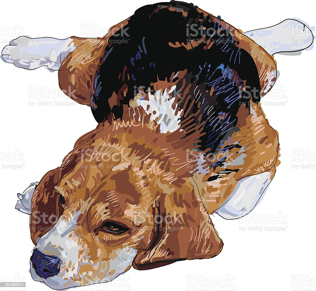 Resting Beagle royalty-free stock vector art