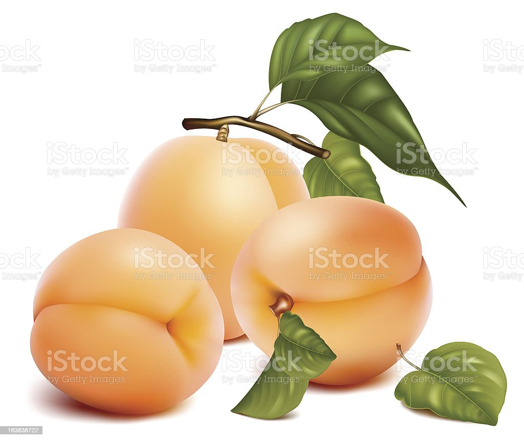 Ripe apricots with leaves royalty-free stock vector art
