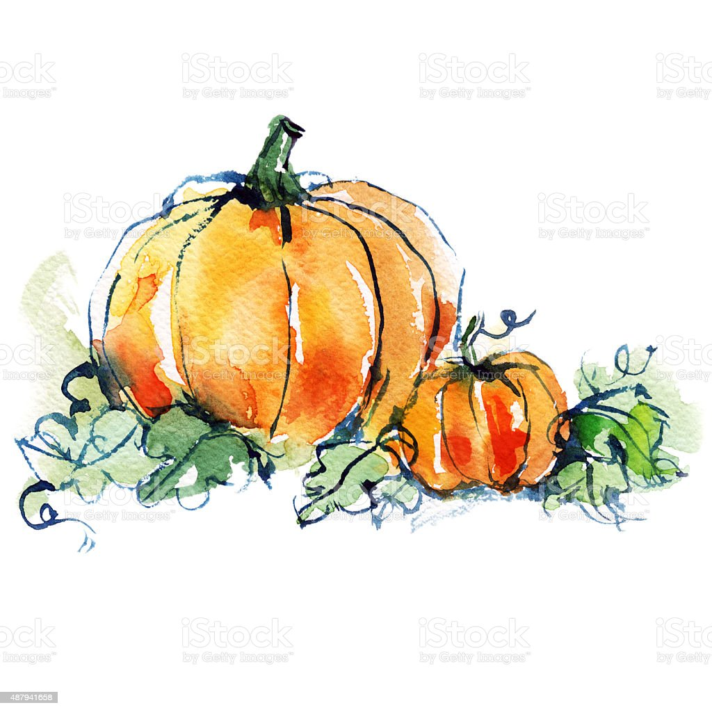 ripe orange two pumpkins with green leaves vector art illustration