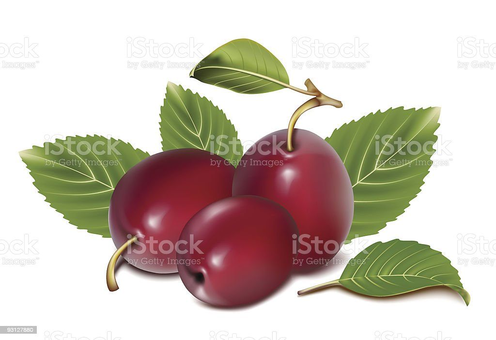Ripe plums with leaves. royalty-free stock vector art