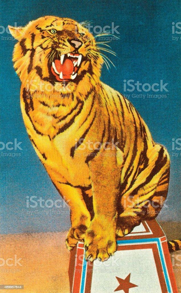 Roaring circus tiger illustration vector art illustration