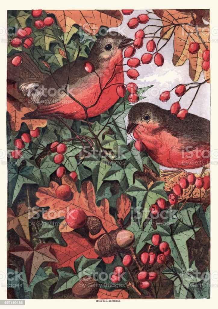 Robins eating berries vector art illustration