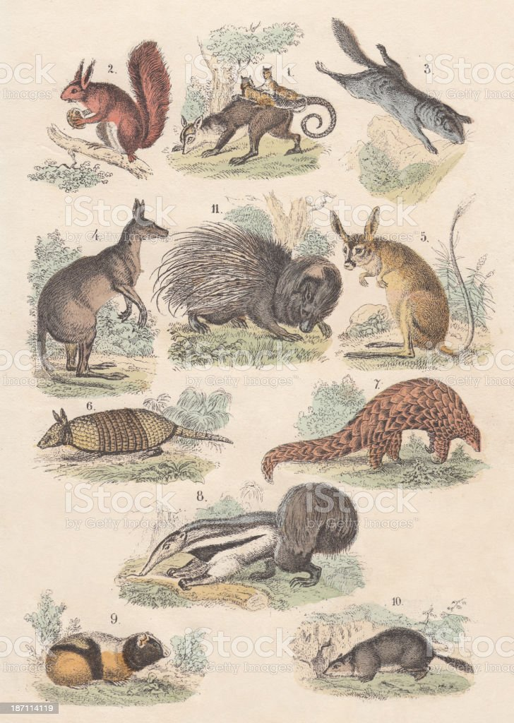 Rodents, hand-colored lithograph, published in 1880 vector art illustration