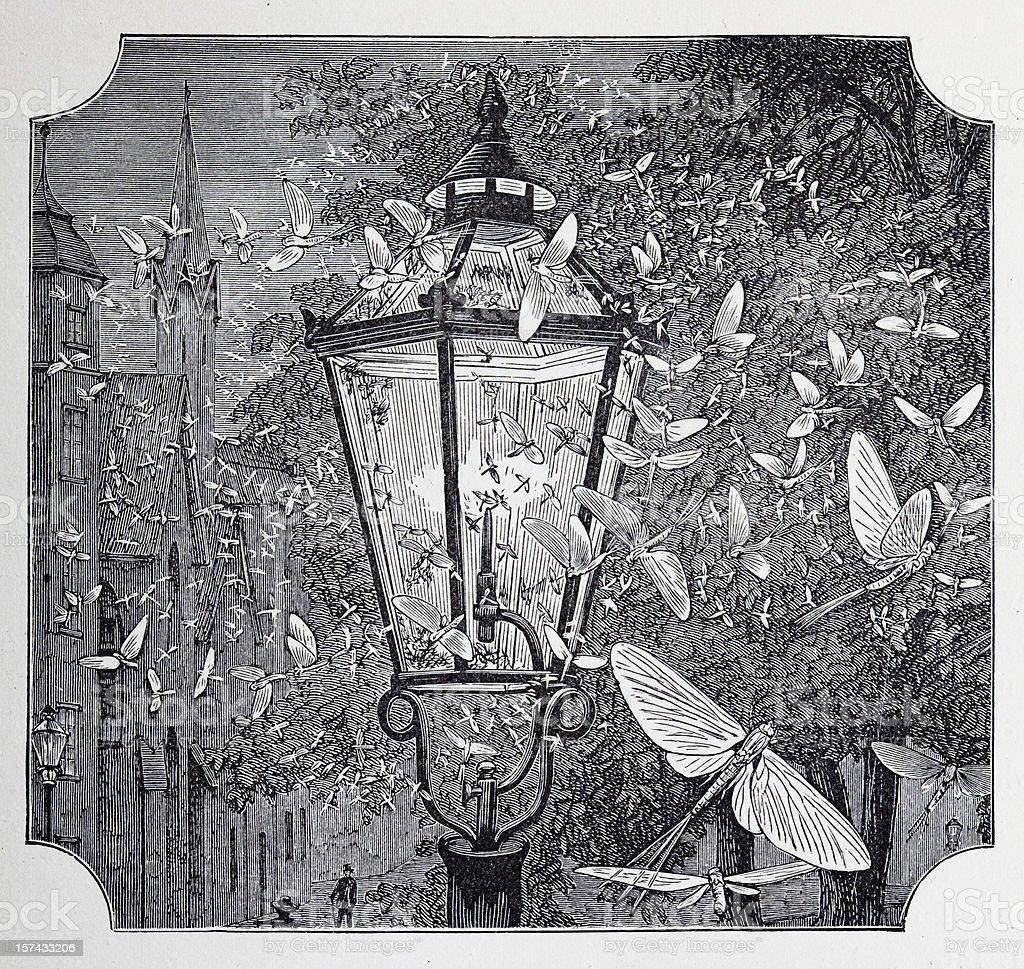 romantic 19th century illustration of a street lamp vector art illustration
