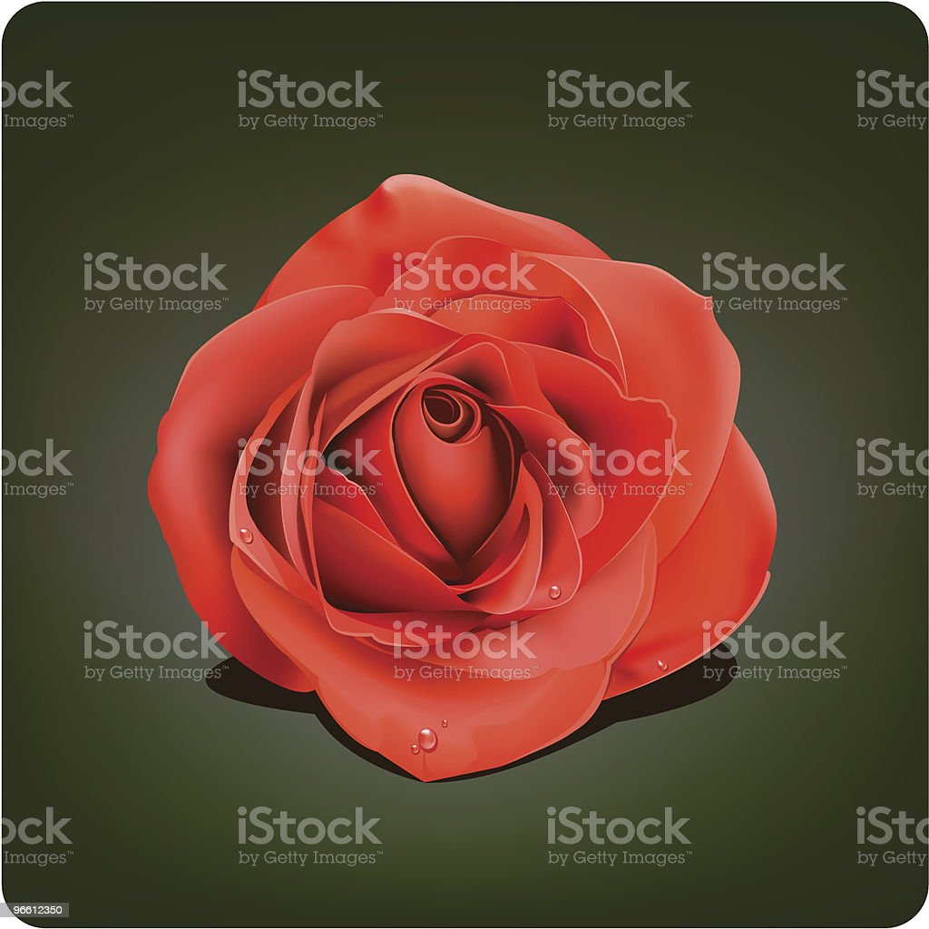 Rose royalty-free stock vector art