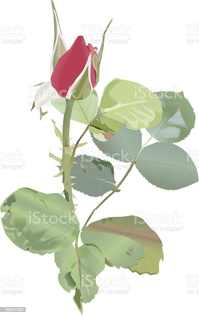 Rosebud royalty-free stock vector art